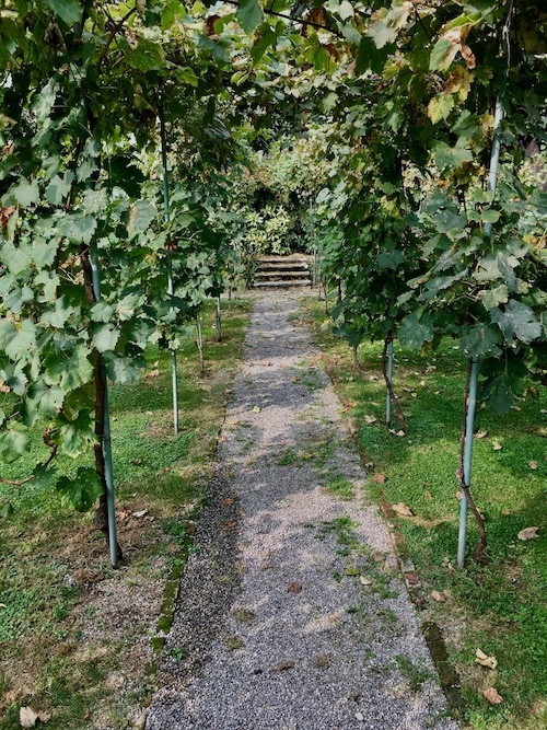 Pathway-to-Leonardos-Vineyard-Reduced.jpeg#asset:204
